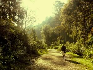 The Woods of Kodaikanal